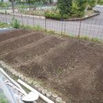 太陽熱マルチ殺草処理(太陽熱土壌消毒)のやり方