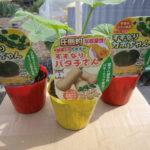 ミニカボチャ(すずなりかぼちゃん、すずなりばた子さん)の栽培方法
