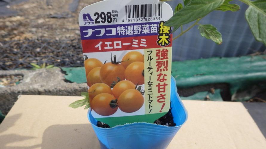 イエローミミ(ミニトマト)の栽培方法