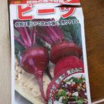 ビーツ(テーブルビート)の栽培方法