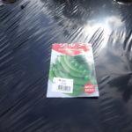 スナックエンドウ豆の栽培方法
